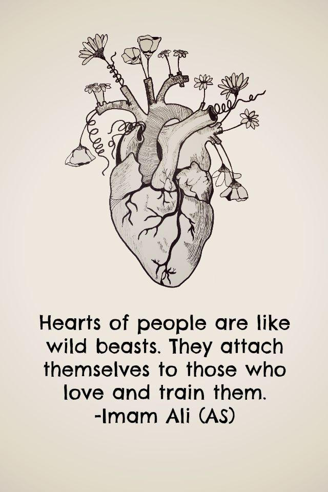 Heart of people are like wild beasts. They attach themselves to those who love and train them. -Imam Ali (AS)