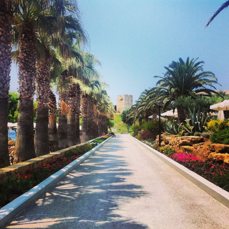 The Palm tree road to the Sani Hill
