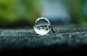 ant rolling a drop of water
