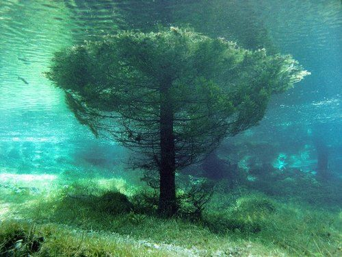 Submerged tree in the Green Lake. The Green Lake or Grüner See is a lake in Austria that dries out almost completely during fall, is used as a county park in the winter and is famous for the underwater park which forms during the spring due to the snow meltdown.: Underwater Trees, Snow Meltdown, Green Lakes Austria, County Parks, Submerged Trees, Beautiful, Underwater Parks, Green Lake Austria, Places