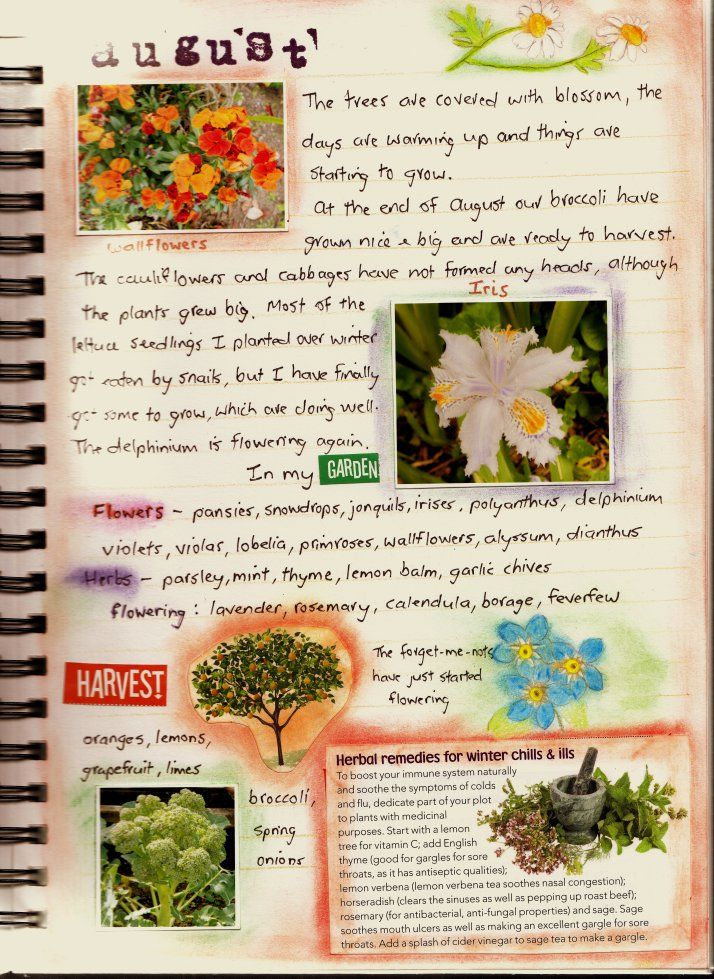 25 best ideas about Garden journal on Pinterest Garden