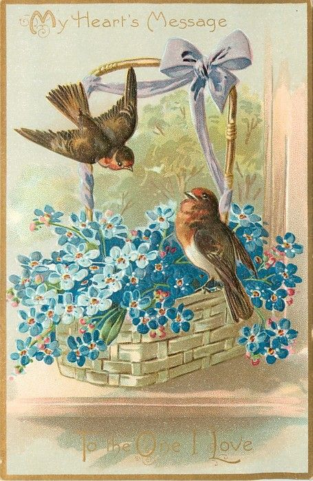 """""""My Heart's Message"""" Valentine's day postcard, featuring 2 robins and a basket of blue forget-me-nots. 1908"""