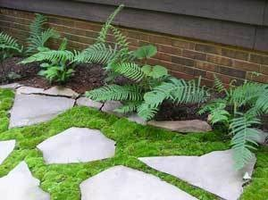 This is a guide about growing moss. In the right place, moss has its place in garden landscaping, if not in your lawn.