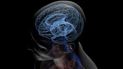 Dyslexie : le cerveau mal connecté?   ICI.Radio-Canada.ca