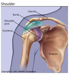 What Is Bursitis? Bursitis is the inflammation or irritation of the bursa. The bursa is a sac filled with lubricating fluid, located between tissues such as bone, muscle, tendons, and skin, that decreases rubbing, friction, and irritation.