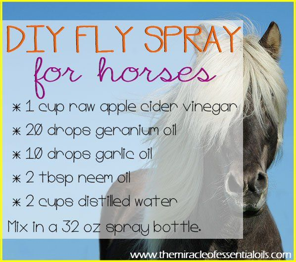 how to make fly spray for horses