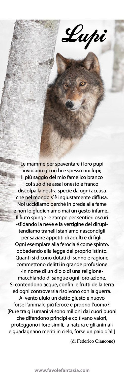 Lupi_Federico-Ciancone.jpg 500×1.575 pixel