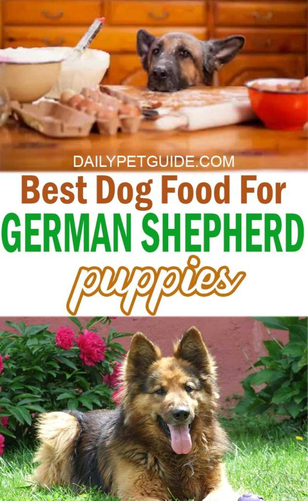 Best Dog Food For German Shepherd Puppies Daily Pet Guide Best