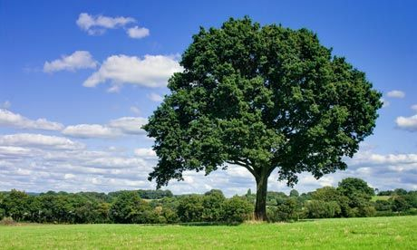 To really save the planet, don't plant trees.  This counterintuitive argument by an atmospheric chemist at Yale makes sense when you consider photosynthesis, albedo, and aerosol production all together.  But don't go chopping down your trees just yet--they also provide habitats and much-needed biodiversity.