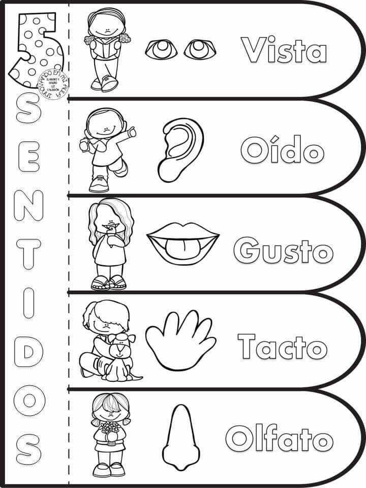 Pin De Patricia Colantuono En Escuela Los Sentidos Para Niños Los Cinco Sentidos En Preescolar Actividades 5 Sentidos