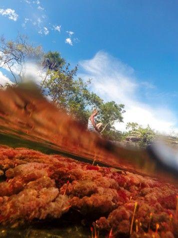 Fotografía estilo Half-Half del río Caño Cristales