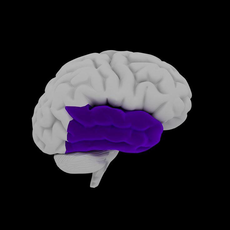 Temporal Lobe Epilepsy  Epilepsy Foundation... The Most common type of epilepsy. .