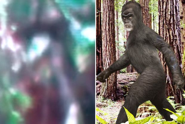 bigfoot: : Eerie footage claims to show latest BIGFOOT sigh...
