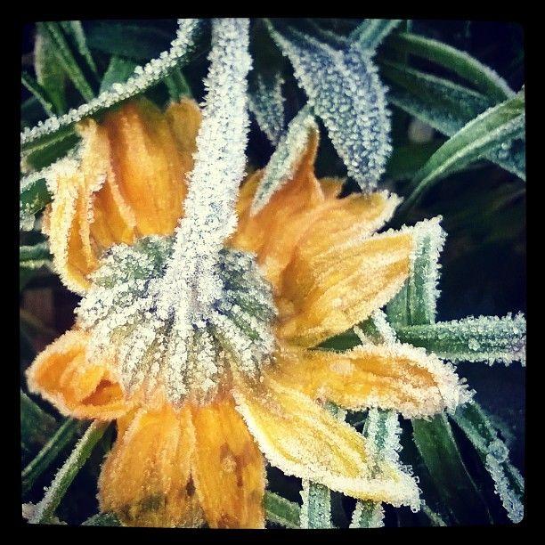 #halla #jäässä #frost #frozen