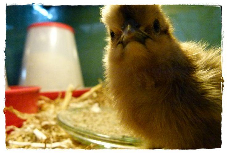 look at the little birdie!