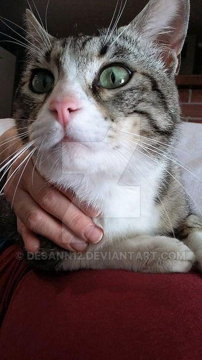Leo: such a proud cat by desann12.deviantart.com on @DeviantArt