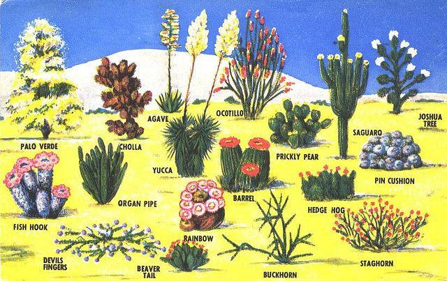 desert landscaping - identify desert plant life