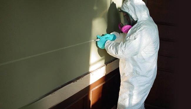 mold removal fort lauderdale