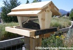 With these bird feeder plans, you can build a large capacity hopper style bird feeder that keeps the seed dry and is easy to refill and clean.  http://www.birdwatching-bliss.com/free-bird-feeder-plans.html