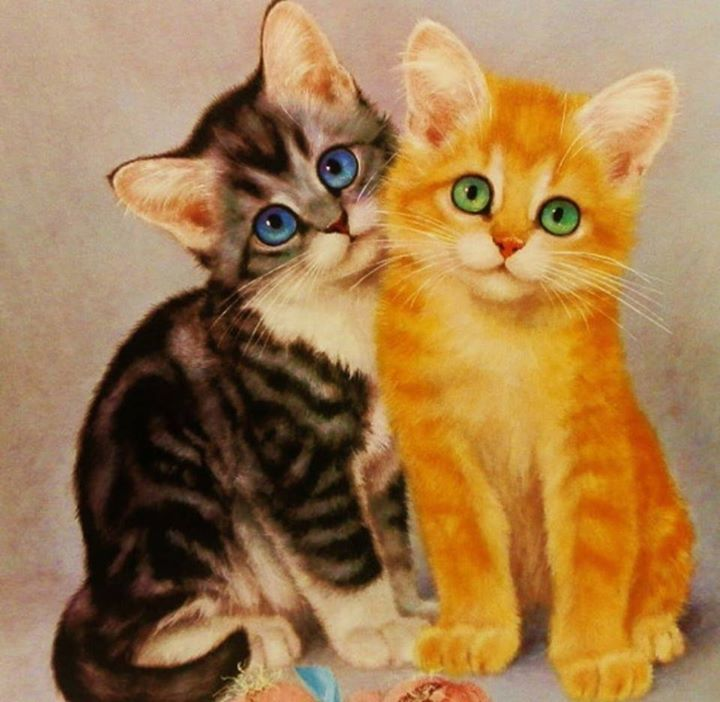 (107) Photos du journal - Gracinhas De Miaus