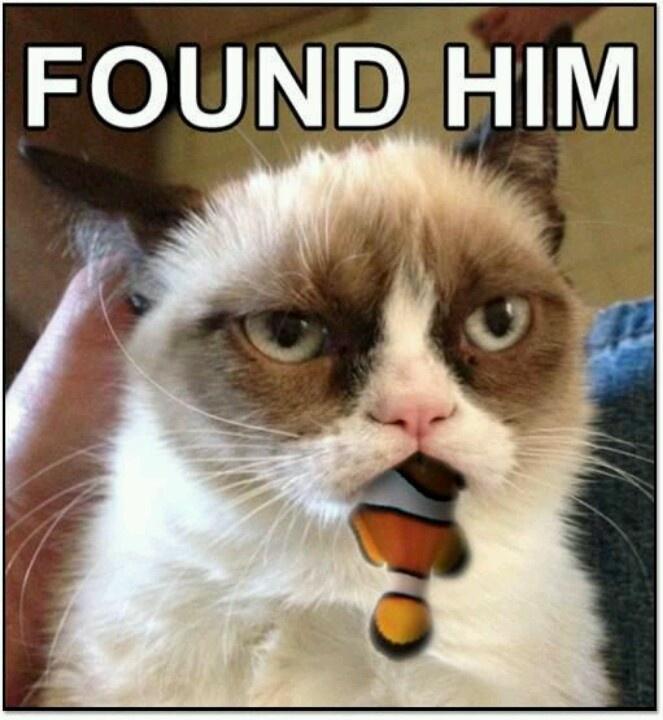Grumpy kitty and finding nemo