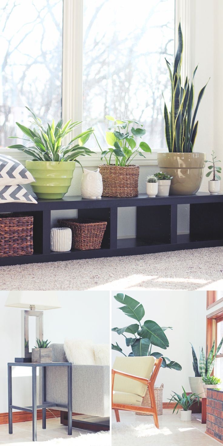 Houseplant Help - indoor gardening inspiration and how-to resources.