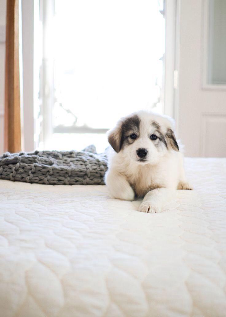 Fluffy puppy