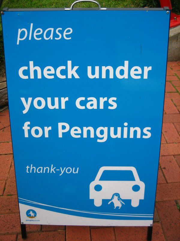 Please check under your cars for Penguins.  @firstexchange #penguins #travel #signs