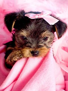Download wallpaper free for mobile phone 1315259086_Cute_Puppy.jpg