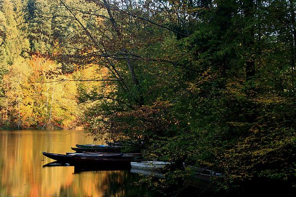 view at River in Bavarian forest