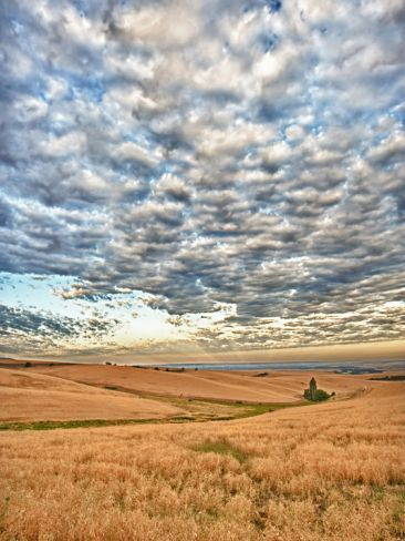 Walla Walla, Washington wheat fields by Richard Duval: