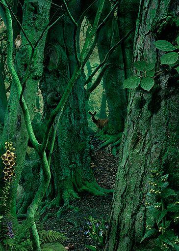 study in green #1 | foto: ruud van empel
