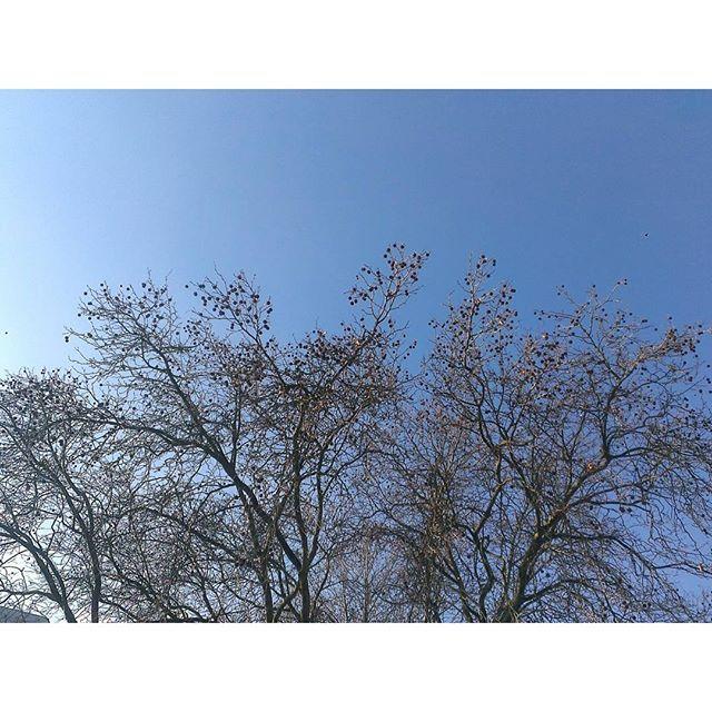 cologne sky