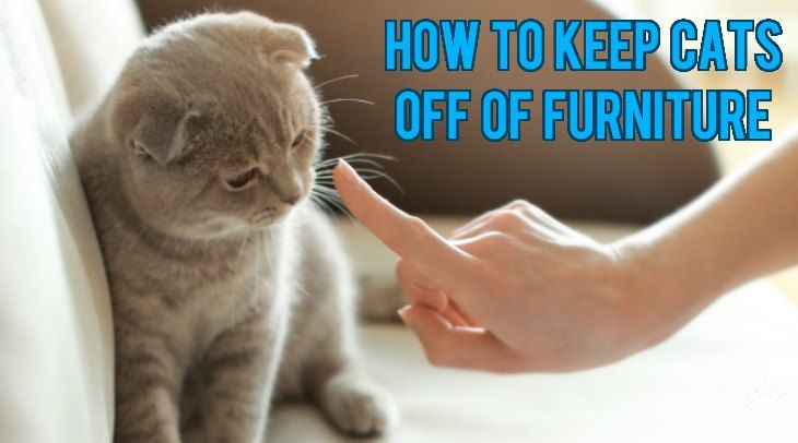 5 Ways How To Keep Cats Off Of Furniture With Images Cats