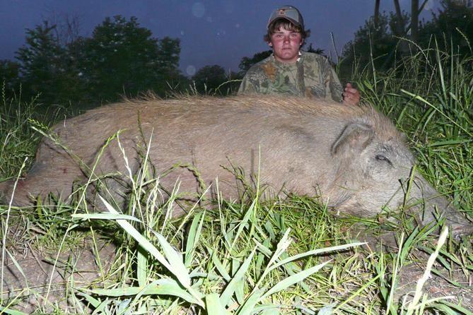 Wild Texas Hog Hunts