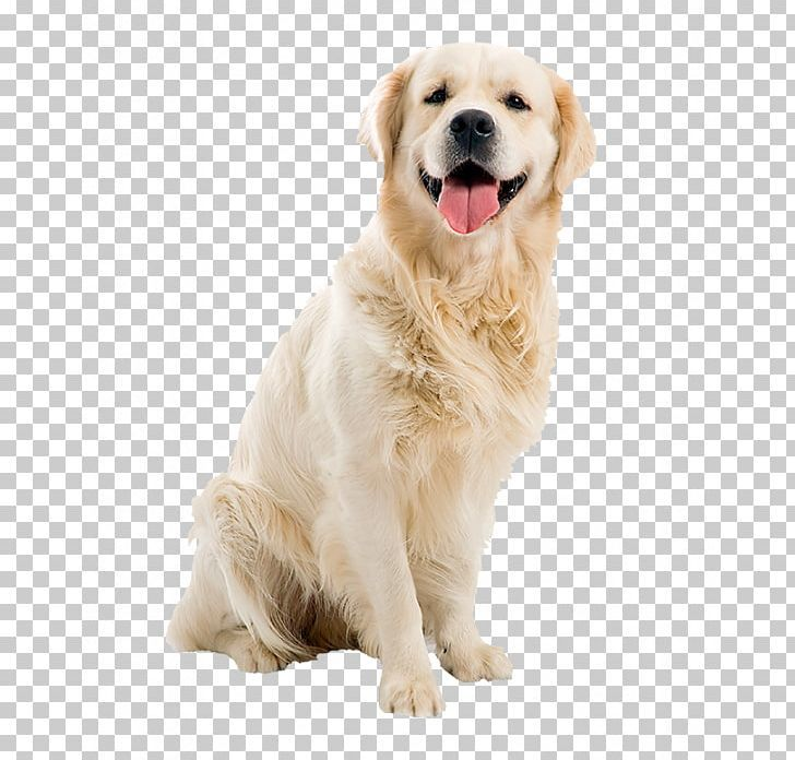 Dogs Png Dogs Retriever Puppy Free Png Downloads Dogs