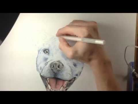 This is how I draw realistic fur. I used polychromos colored pencils and copic markers. This is my first but I will be posting many more. Feel free to ask an...