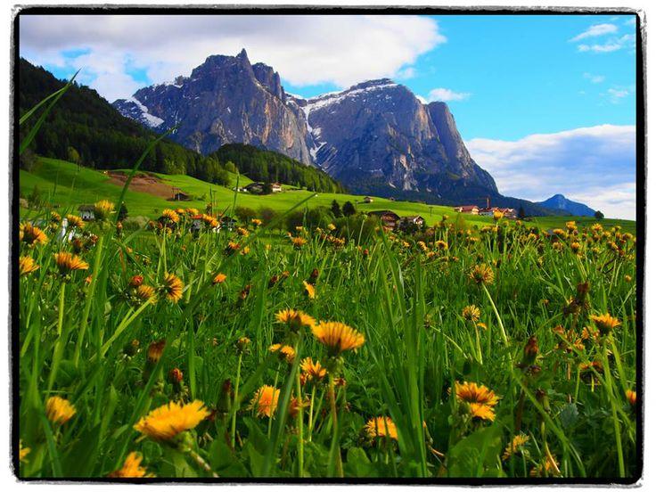"""Angela Scatorchia, """"Primavera allo Sciliar"""", Castelrotto (BZ) #TrentinoAltoAdige  #escursionismo #escursione #escursioni #outdoor #natura Escursionismo.it"""