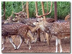 Visit Nandankanan Zoological Park: Visakha Travels in Bhubaneswar is the travel agency at your administration. It gives best visiting agency in Odisha.