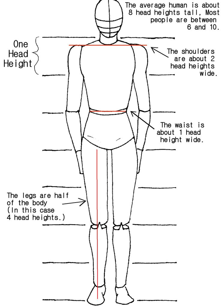 Body Proportions Tutorial by crazy-fae.deviantart.com on @deviantART