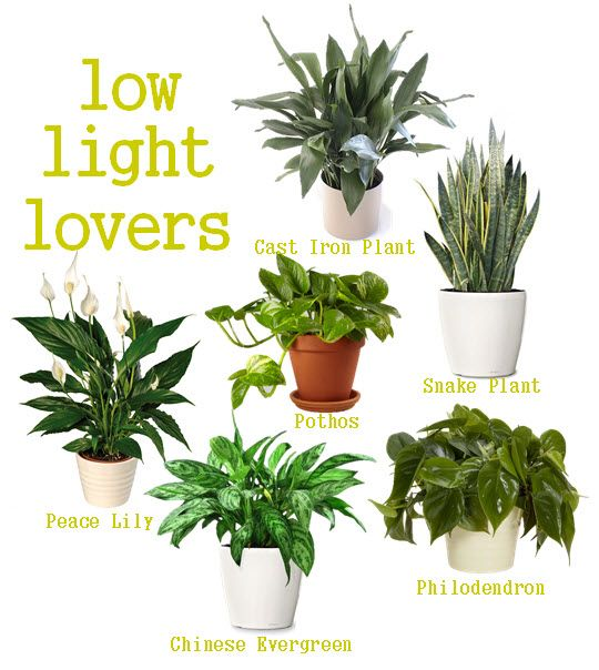 office plants no sunlight plants for the home pinterest low