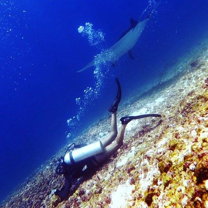 #underwater #underwaterphoto #underwaterphotography #dive #diving #divecenter #scuba #reef #manta #mantaray #labuanbajo #flores #eastnusatenggara #wonderfullindonesia #indonesia #igphotomagic #bg_underwater #beauty_of_nature_ #ocean