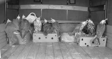 Хищные птицы - Всемирный фонд дикой природы (wwf)