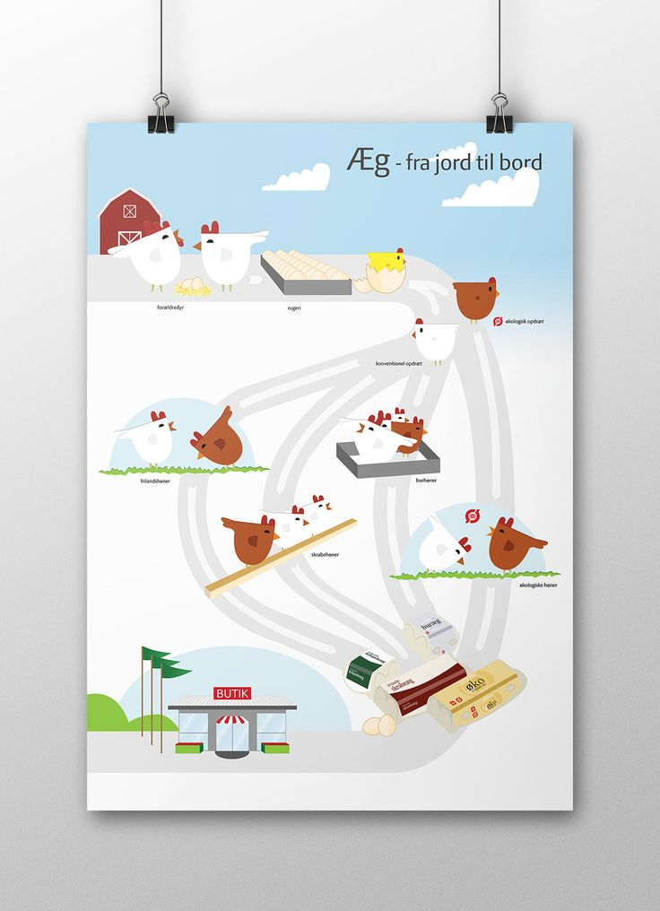 Eggs from hen to table #vector #illustration #eco #egg #chicken #brandrocket