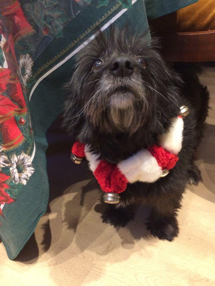 2247 besten Westies/Cairns/Scotties/Terriers Bilder auf Pinterest ...