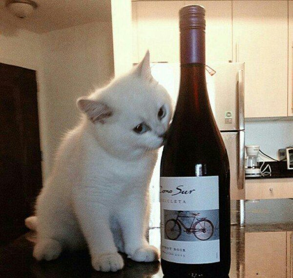 WHITE KITTY WITH RED WINE
