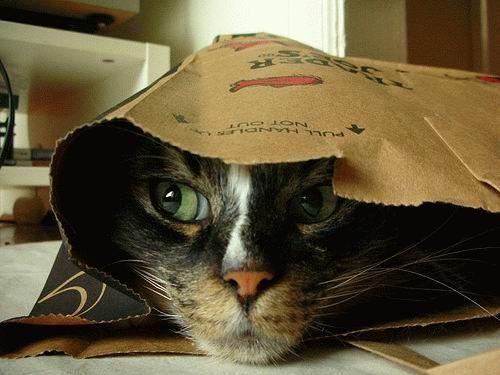 Самые красивые кошки .. Обсуждение на LiveInternet - Российский Сервис Онлайн-Дневников