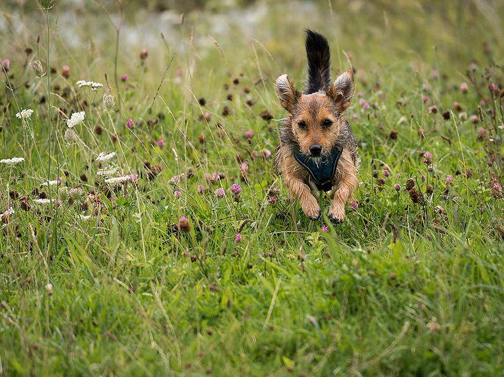 Doggieshoot. beauty animals dog puppy summer beautiful animal cute love dogs running fun funny pet pets doggy pup furry adorable offleash