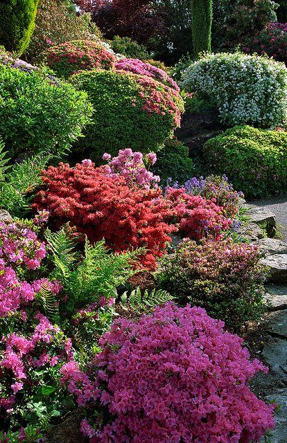 Leonardslee Gardens, West Sussex, UK - pink and red flowering Kurume azaleas and rhododendrons