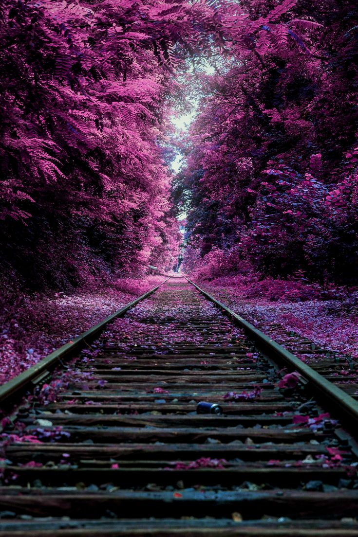 Railroad tracks - title Railroad to my realm. - by Natan Vance